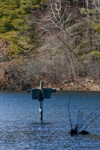 Birdhouse in the Lake