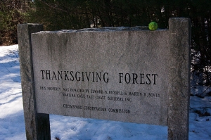 Thanksgiving Forest